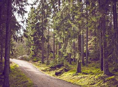 The forest and sustainable forestry